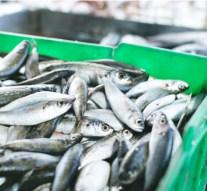 El 66% de los españoles compra pescado, al menos una vez a la semana