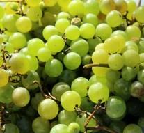 Empresas murcianas exportan uva de mesa a China