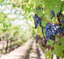Agricultura establece el dalendario de medidas para mejorar el sector del vino