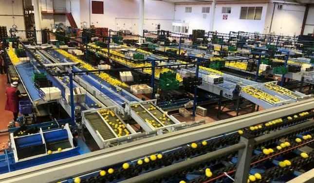 Agrios El Carril amplía su capacidad productiva invirtiendo 2 millones de euros