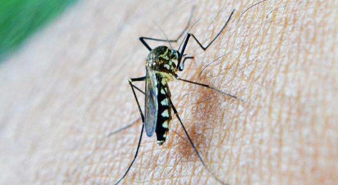 La enfermedad del Dengue en el Mediterráneo
