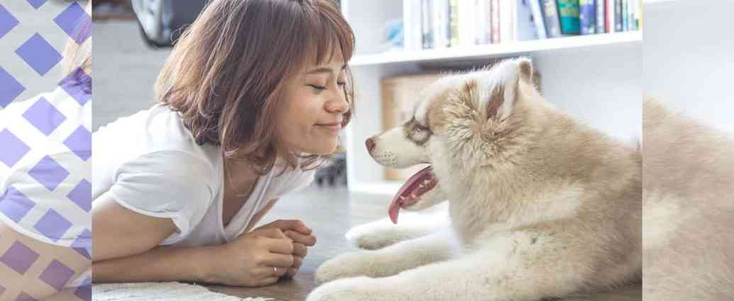 Great Advice For Training Your Dog will Improve your Health