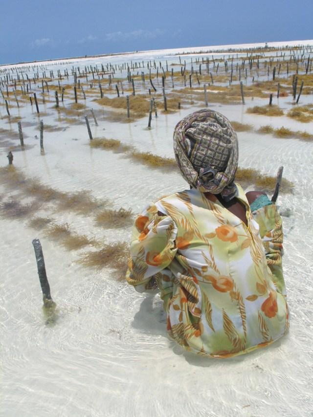 Seaweedkvinnen Fatma steller teigen sin1_til nett. jpg