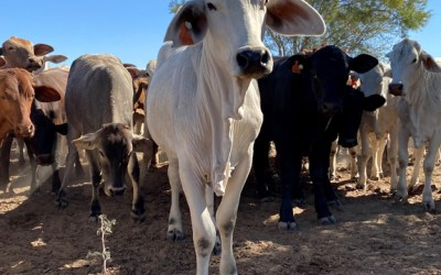 3 reasons why you should be supplementing your cattle herd