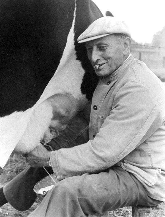 boer met koe