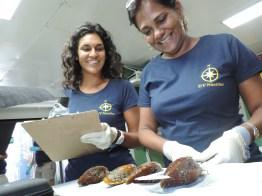 Dr. Gobin and myself measuring Bathymodiolus mussels.