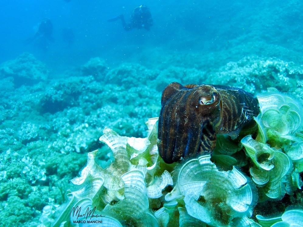 Shhhh...don't wake the cuttlefish.