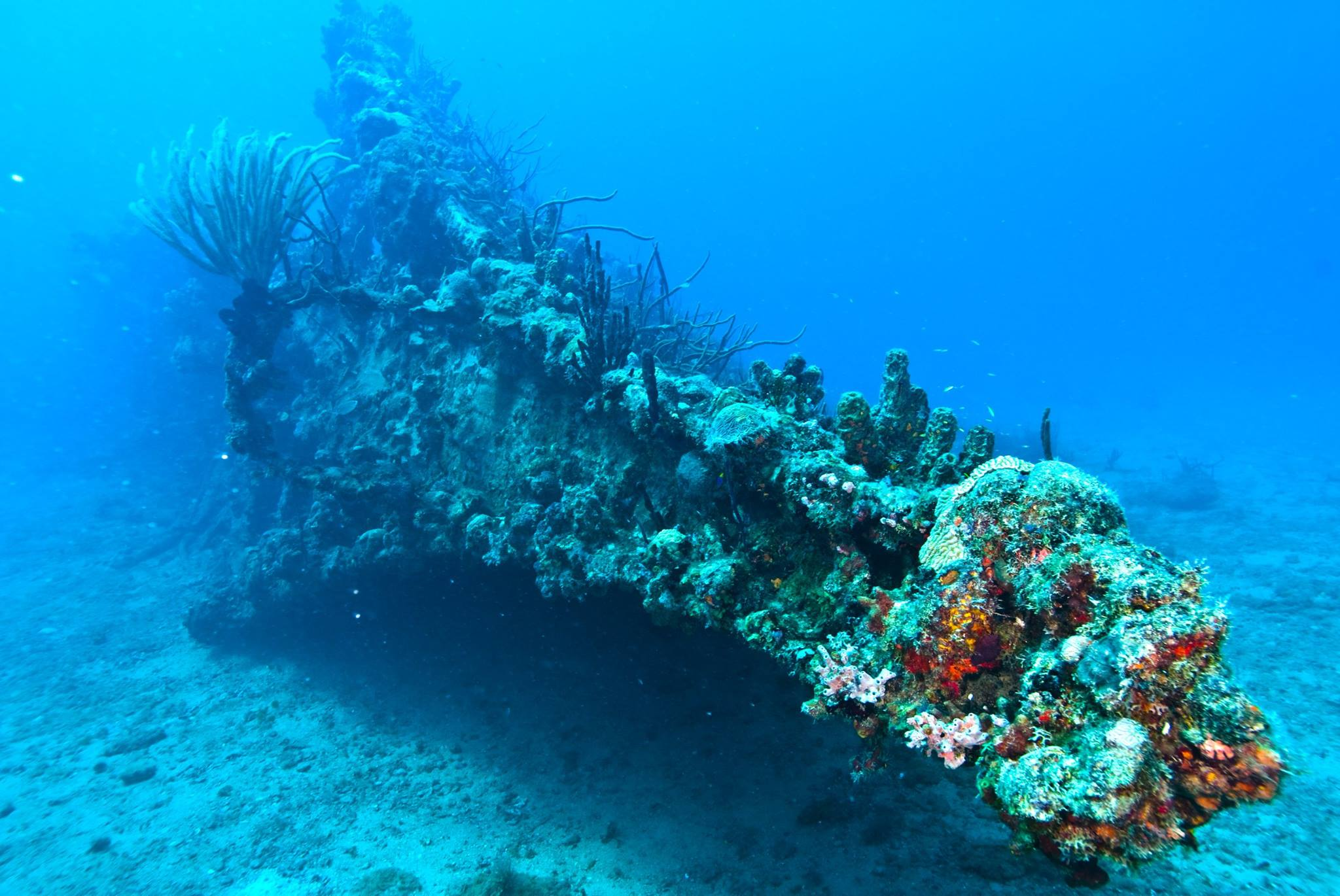 The Wreck Of The RMS Rhone Dive BVI