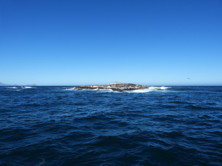 A day with Apex Shark Expeditions and Chris Fallows