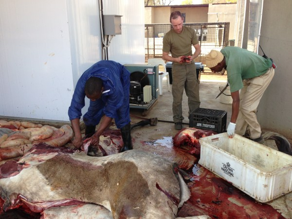 Cutting up horse meat for lions