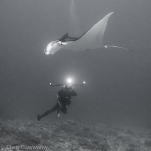 Justin Bruhn and manta ray