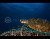 Turtle by Justin Bruhn