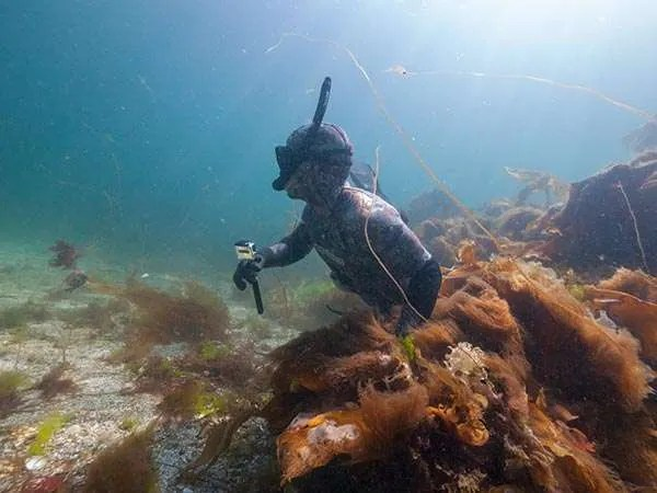 Freediver using a GoPro video camera