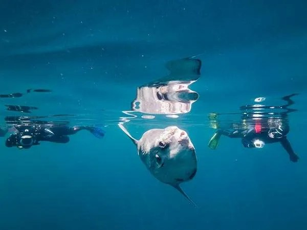 Snorkellers photography