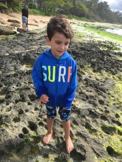 Joey scrambles over volcanic rocks without trouble