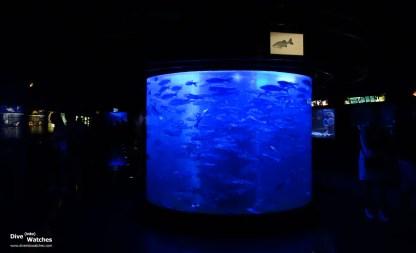 Musee_Oceanographique_Monaco_Impressions_5_2013