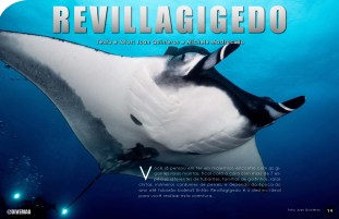 divemag76w_Page_15