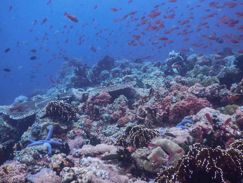 Bahura Dive Site in Anilao Batangas