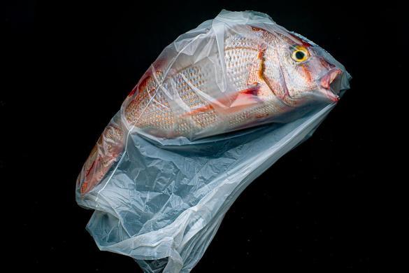 A plastic ocean | Jorge Reynal - ganadora en la subcategoría Still Life