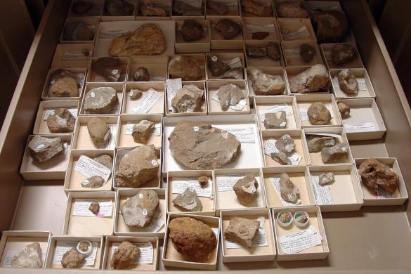 Colección paleontológica de la Semahn, única en el sureste de México