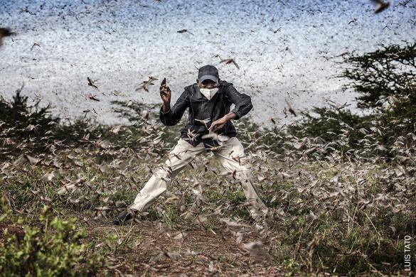 Fighting Locust Invasion in East Africa | Luis Tato, España