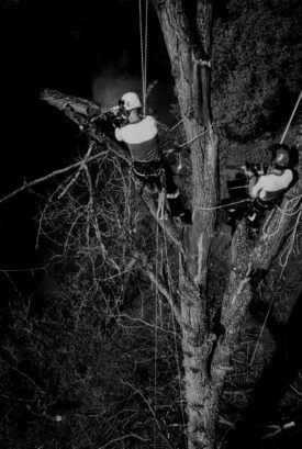 Tree-care-Brno-Czech-republic-Photo-Pavel-Nesvadba-darken