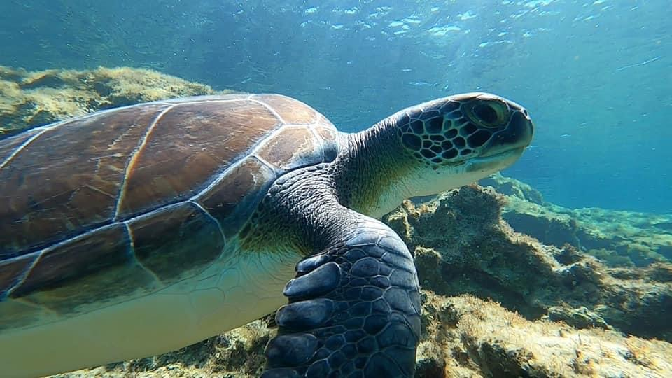 Turtle swimming towards surface