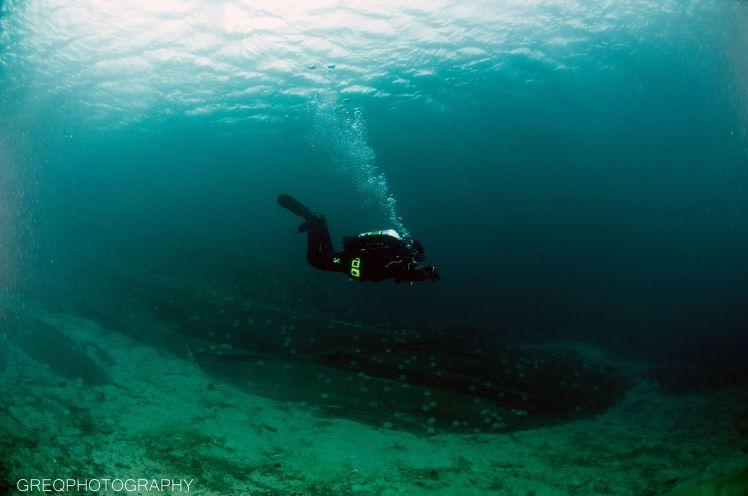 Dykker, god sikt, sandbunn, overflate, kråkeboller