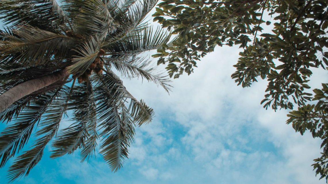 Árboles en Tailandia