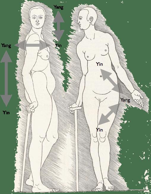 Yin Yang Body