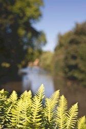 Wedding Busbridge Lakes, Surrey058