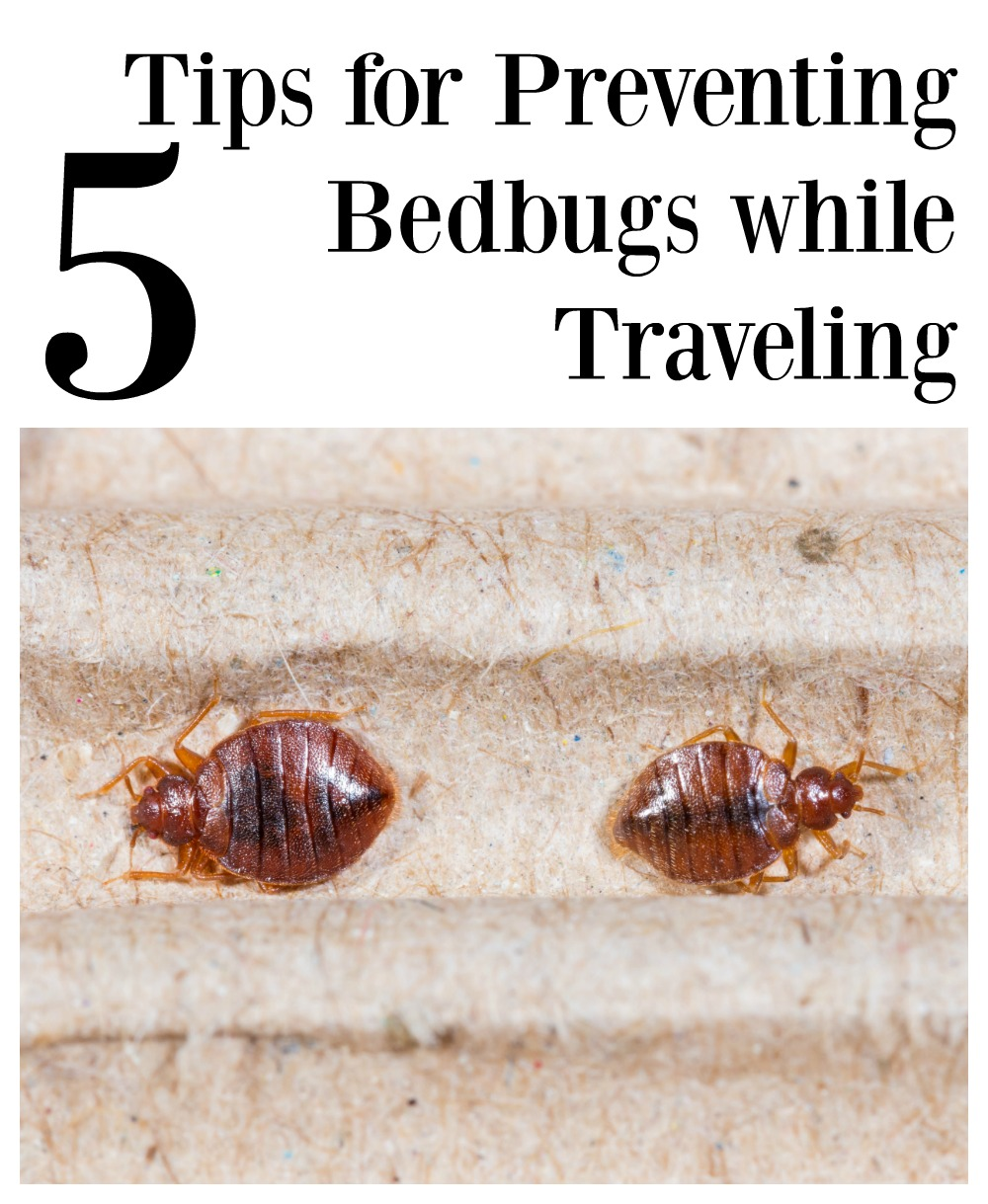 5 tips for preventing bedbugs while traveling