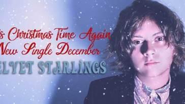 Velvet Starlings Its Christmas Time