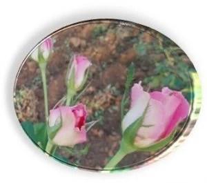 3.- botón de rosa