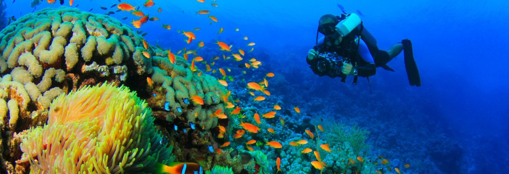 Seychelles Liveaboards