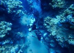 Красное Море Египет Шарм Эль Шейх