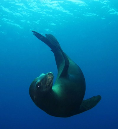 Photo Gallery | DIVING CATALINA
