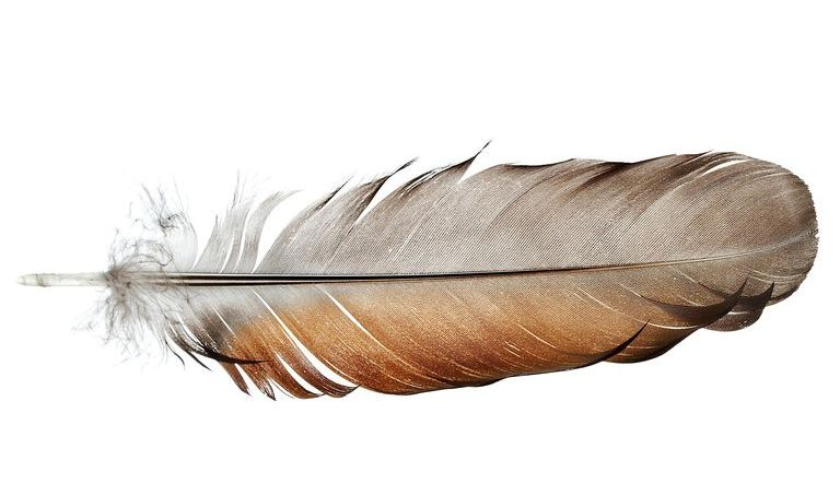 Feather and down: origin and processing 4