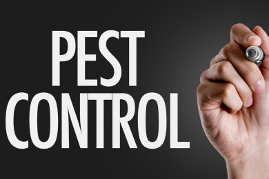This Is How to Get Rid of Pests in Your House 1