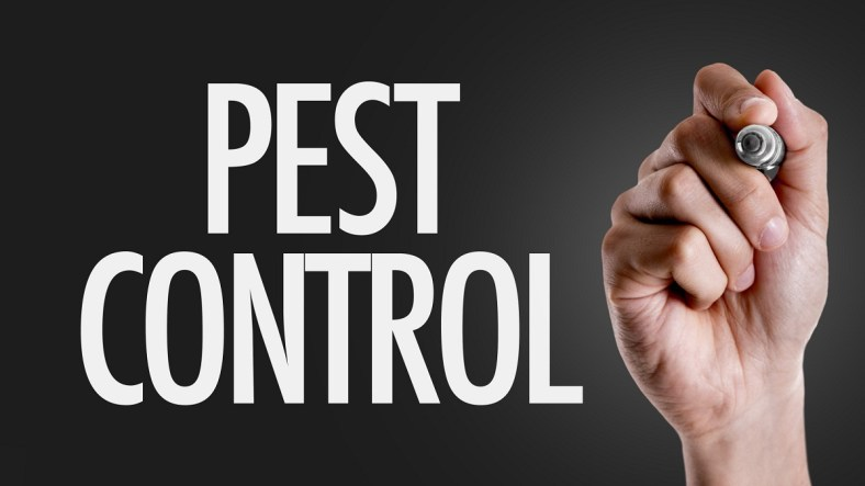 This Is How to Get Rid of Pests in Your House 2