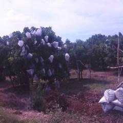 Harga Atap Baja Ringan Yogyakarta Galvalum Untuk Pagar Kebun – Distributor Sidoarjo ...