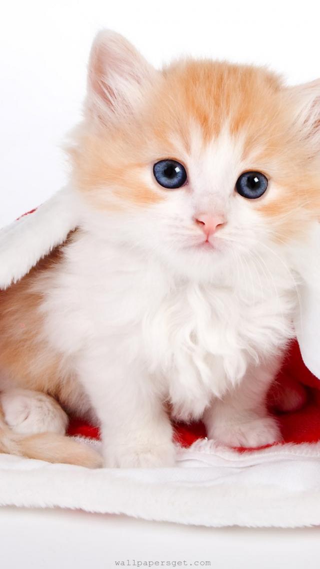 Cute Cat Iphone 6 Wallpaper Iphone5壁紙 640x1136 かわいい犬や猫などの動物の壁紙 25選& 65281