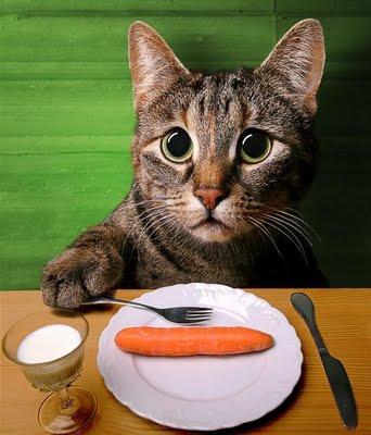 gato comer comendo cenoura dieta forçada
