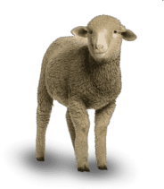 ovelha dolly sheep
