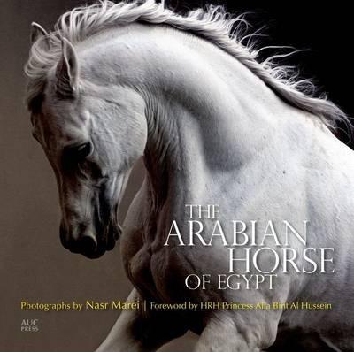 Arabian Horse of Egypt