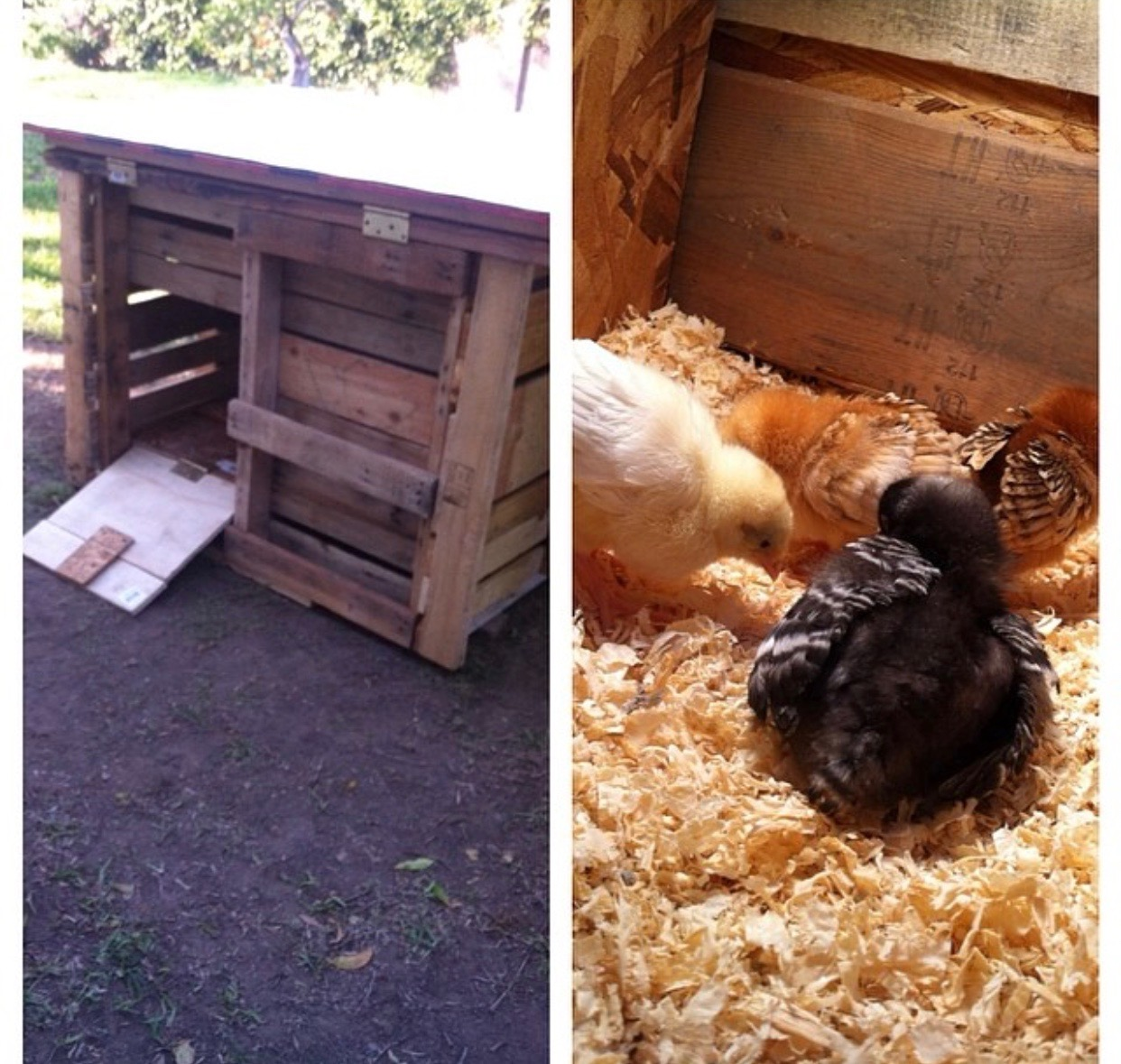 Chicken Coop Tips