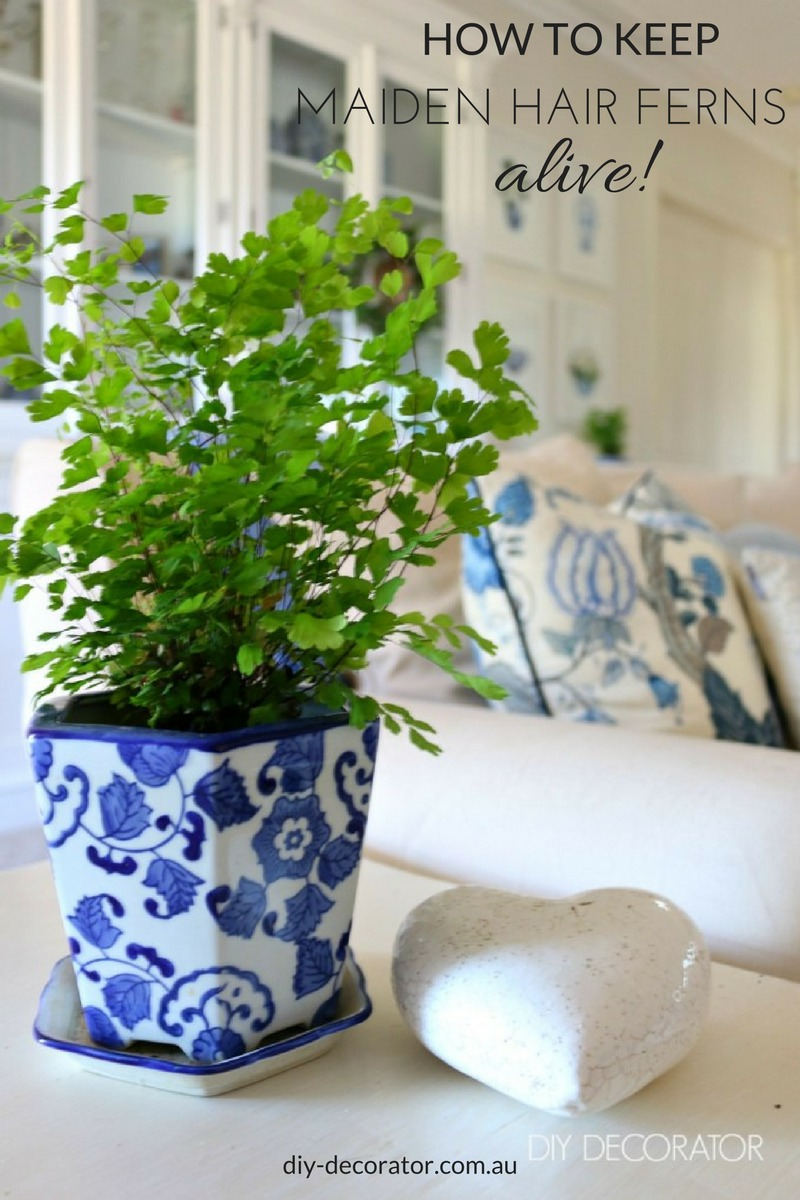 how to keep maiden hair fern alive