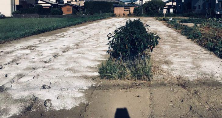 石灰を撒いた畑