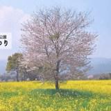 しまばら火張山花公園の春の花まつり