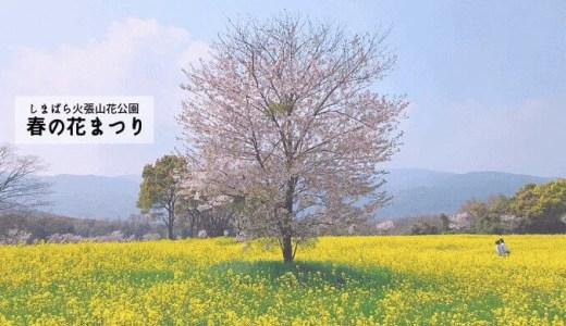 しまばら火張山花公園 春の花まつりの菜の花畑はまるで黄色の絨毯のよう